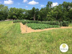 Farm Fresh Produce in Cincinnati