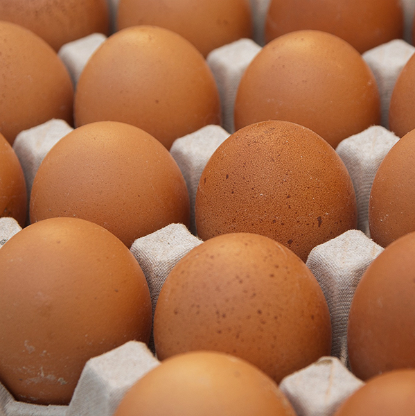 Local Organic Farm Fresh Eggs