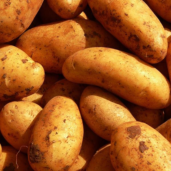 Idaho Potatoes (ea.)