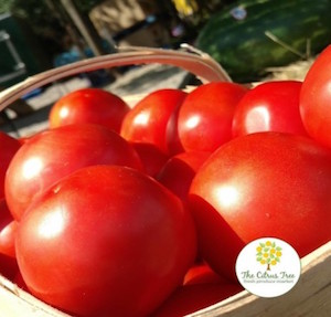 Homegrown Tomatoes Are Back!
